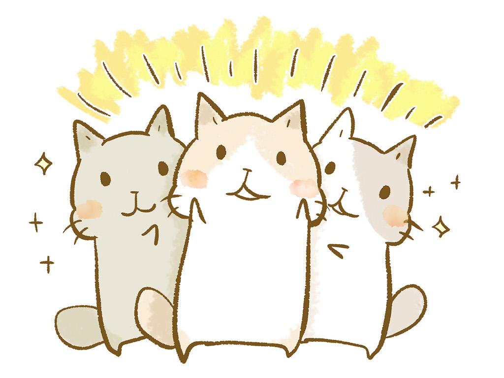 守山市の今プラス元布団屋の倉庫店でお待ちしてます!と訴える猫