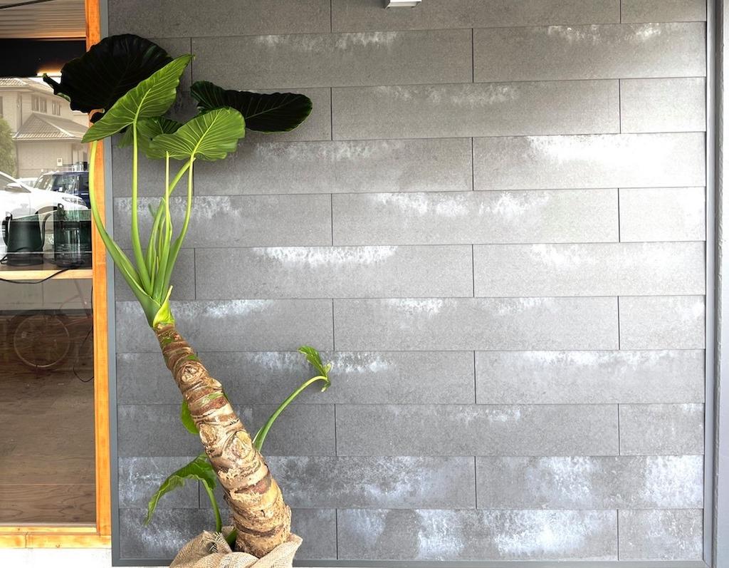 仕事・起業・勉強がはかどる守山市のコワーキングスペース今プラスの店舗前に置かれている植物